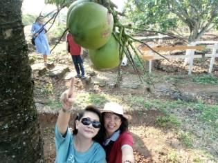 pdkk kebun buah2